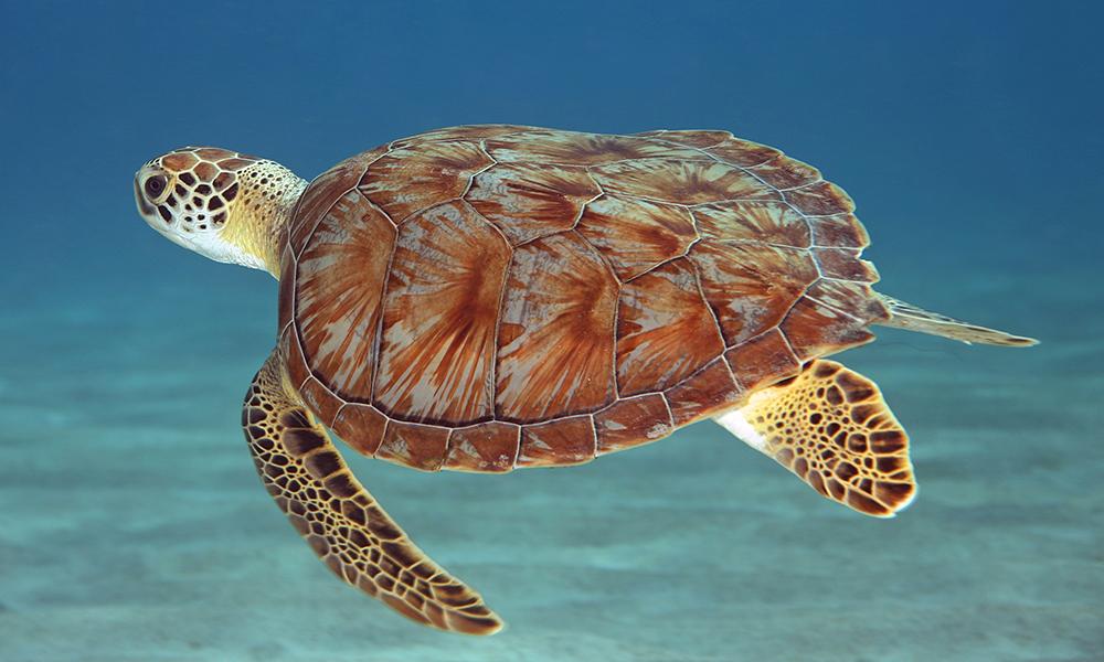 duiken en snorkelen curacao