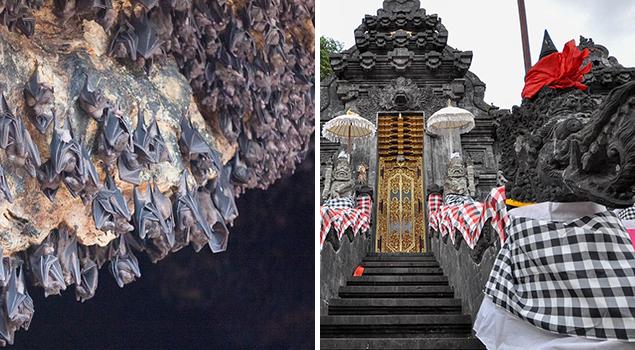 Vleermuizengrot Bali -  - Bezienswaardigheden Bali