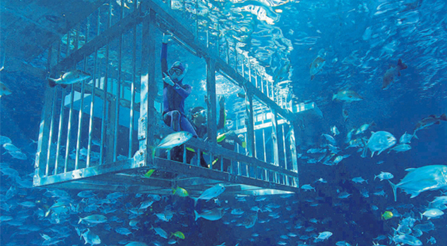 dubai-aquarium-duik-2