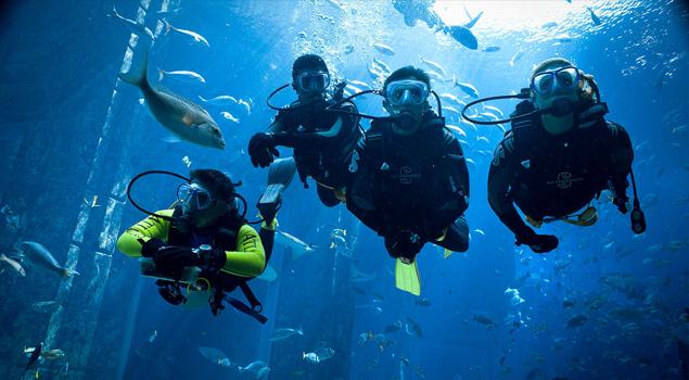 dubai-aquarium-duik