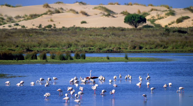 donana-national-park