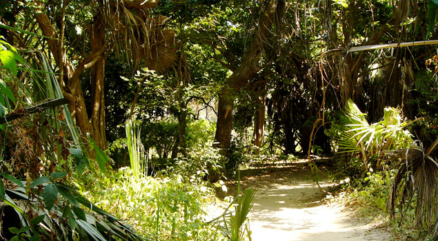 Bijilo Forest Park Nature Reserve