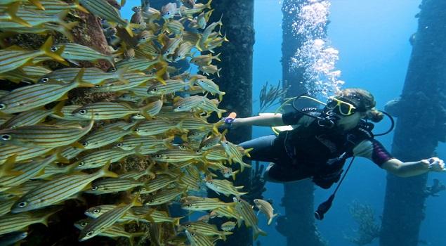 Duiker met vissen in Salt Pier