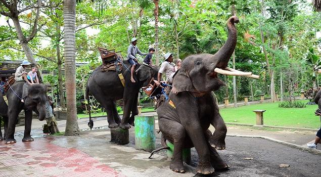 Bali World Animal Protection